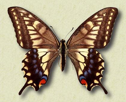 il giochino delle immaggini - Pagina 5 1272560192_farfalla3