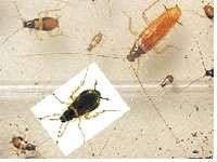 Gli scarafaggi meteowebcam